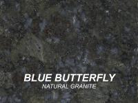 BLUEBUTTERFLY_swatch-w1000-h1000