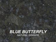 BLUEBUTTERFLY_swatch-w1000-h1000